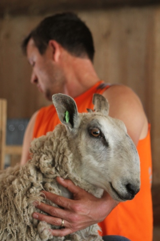 2016 Shearing Leicesters 182