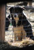 2016 Shearing Shetlands 148
