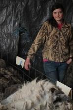 2016 Shearing Shetlands 169
